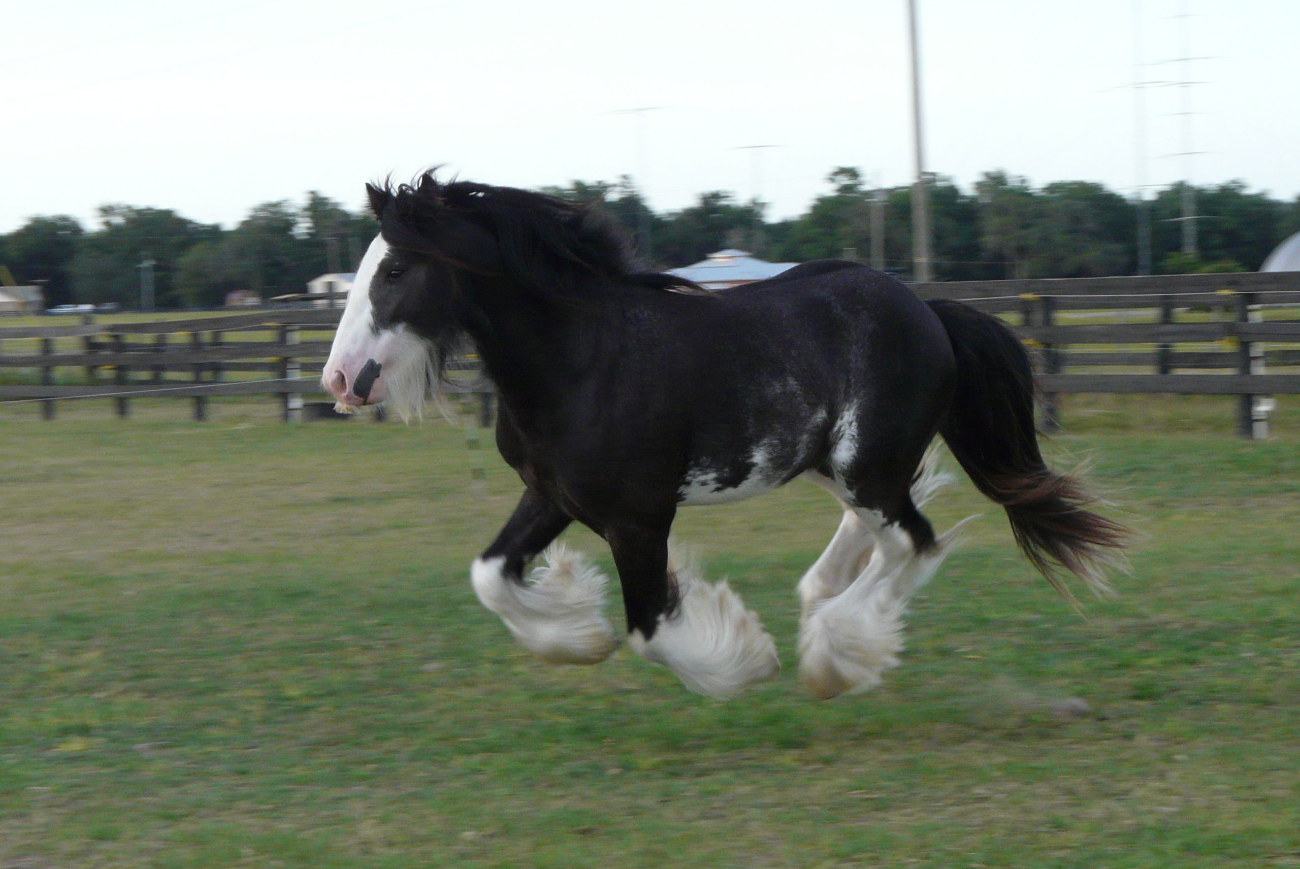Stallions / Colts for Sale